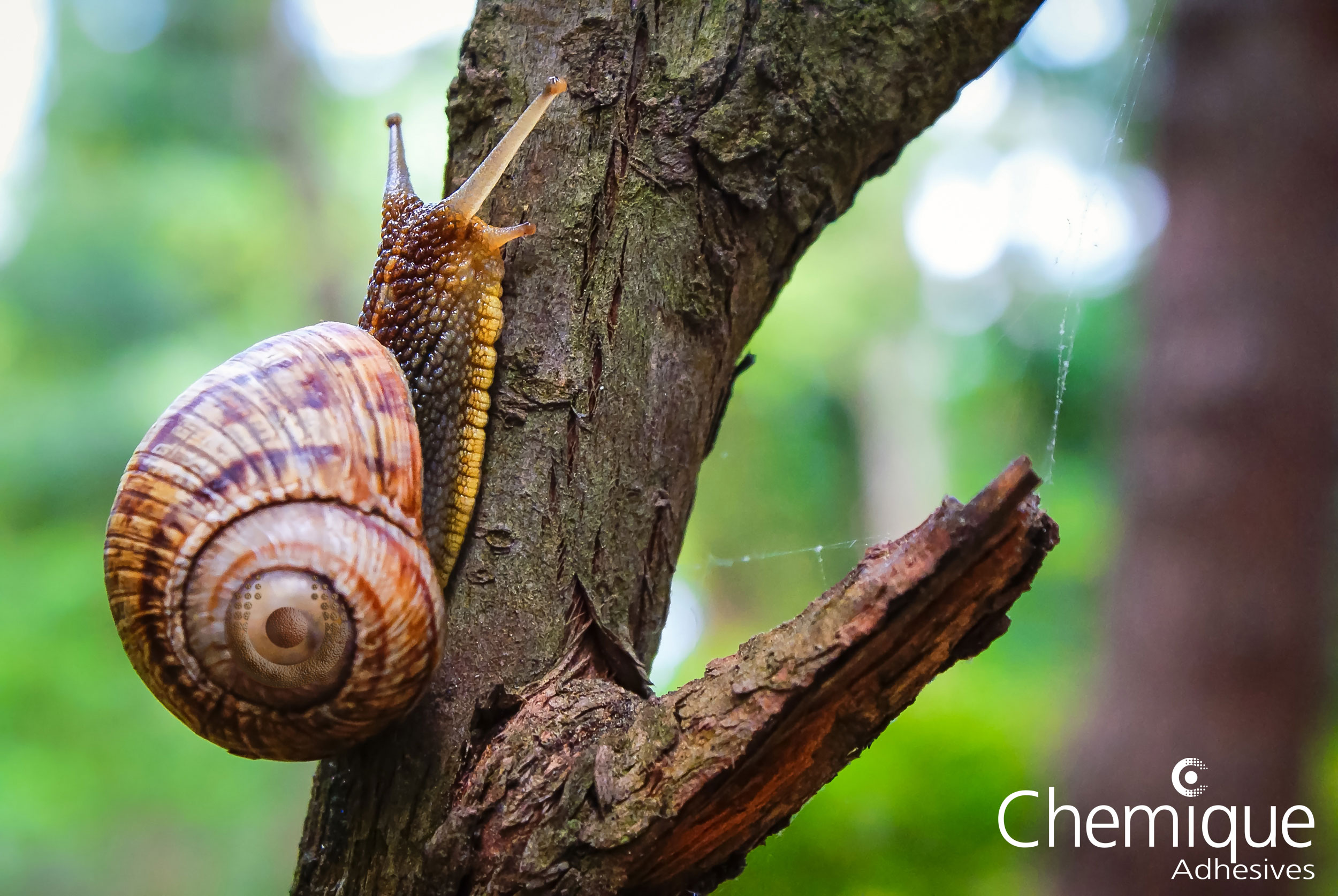 Chemique-Adhesives-Blog---Reversible-Adhesives-Snail-Slime